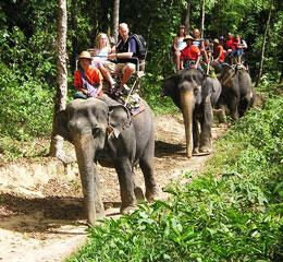 Elephant Trekking activities in Phuket
